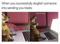 Cute, Dogs, and Memes: When you successfully dogfish someone  into sending you treats  @BetaSalmon BEWARE!! ❌ cute dogs scamming you out of ur treets @betasalmon 😵 follow @betasalmon