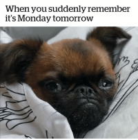 Monday, Sunday, and Why: When you suddenly remember  it's Monday tomorrowW Why does this happen every Sunday? 😫