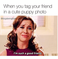 Cute, Memes, and Good: When you tag your friend  in a cute puppy photo  @dogsbeingbasi  I'm such a good friend You're welcome betch.