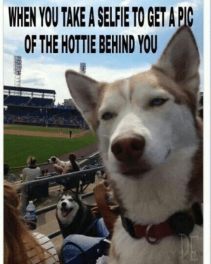 Animals, Funny, and Memes: WHEN YOU TAKE A SELFIE TO GETA PC  OF THE HOTTIE BEHIND YOU 50+ Funny Husky Memes That Will Keep You Laughing For Hours #husky #huskymemes #dogmemes #memes #funnymemes - Lovely Animals World
