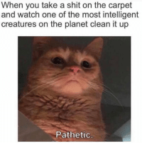 Clean It Up: When you take a shit on the carpet  and watch one of the most intelligent  creatures on the planet clean it up  Pathetic
