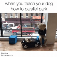 """Memes, Coffee, and How To: when you teach your dog  how to parallel park  coffee worl  @barkbox  @showmenoodz """"I'M REALLY GETTING THE HANG OF THIS."""" literallythatsyou needforspeed . @showmenoodz"""