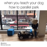 Memes, Coffee, and How To: when you teach your dog  how to parallel park  coffee worl  @barkbox  @showmenoodz We taught Noodle how to park today. He's really getting the hang of it. barklife @showmenoodz