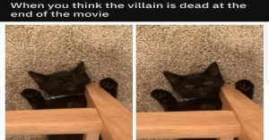 Happy Caturday! Enjoy these delicious kitty goodness memes, in all of their adorable glory.#cats #caturday #catmemes #funnymemes #animals #animalmemes #caturdaymemes #funnyanimals: When you think the villain is dead at the  end of the movie Happy Caturday! Enjoy these delicious kitty goodness memes, in all of their adorable glory.#cats #caturday #catmemes #funnymemes #animals #animalmemes #caturdaymemes #funnyanimals