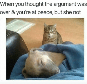 Animals, Dogs, and Memes: When you thought the argument was  over & you're at peace, but she not Dog Memes Of The Day 32 Pics – Ep52 #animalmemes #dogmemes #memes #dogs - Lovely Animals World