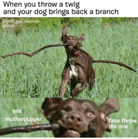 Oh snap lol @griff_gsp_boomer: When you throw a twig  and your dog brings back a branch  @griff gsp boomer  @bark  yea  mutherpupper  fake throw  dis one Oh snap lol @griff_gsp_boomer