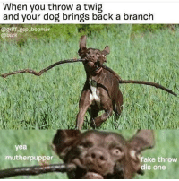 """<p>Mutherpupper via /r/memes <a href=""""http://ift.tt/2tIne3O"""">http://ift.tt/2tIne3O</a></p>: When you throw a twig  and your dog brings back a branch  @griff-gsp-boomer  barke  yea  mutherpupper  fake throw  dis one <p>Mutherpupper via /r/memes <a href=""""http://ift.tt/2tIne3O"""">http://ift.tt/2tIne3O</a></p>"""