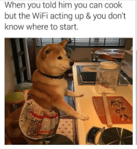 Memes, Animal, and Best: When you told him you can cook  but the WiFi acting up & you don't  know where to start. *fakes death* @animalsmeettheinternet has the best compilation of animal memes on IG!