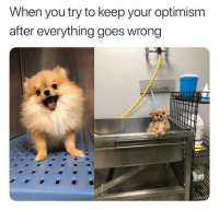 Optimism, You, and When You: When you try to keep your optimism  after everything goes wrong When you try to keep your optimism after everything goes wrong