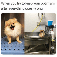 Funny, Okay, and Optimism: When you try to keep your optimism  after everything goes wrong Everything is A OKAY 👌🏻