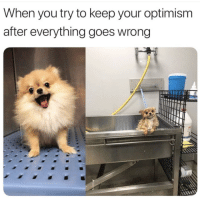 Happiness, Optimism, and Fluffy: When you try to keep your optimism  after everything goes wrong Fluffy happiness