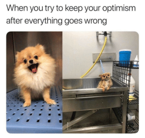 Optimism: When you try to keep your optimism  after everything goes wrong