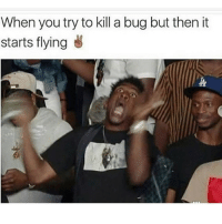 Meme, Memes, and Good Morning: When you try to kill a bug but then it  starts flying Good morning meme fans ❤️💙