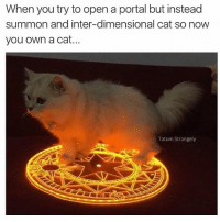 When you try to open a portal but instead  summon and inter-dimensional cat so now  you own a cat...  Tatum Strangely Ill take the cat 😂 (@Tatum.strangely)