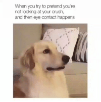 Crush, Memes, and 🤖: When you try to pretend you're  not looking at your crush,  and then eye contact happens When you're busted why not just give in | 👉 @cuteandfuzzybunch 👈