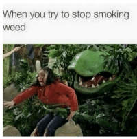 smoking weed: When you try to stop smoking  weed