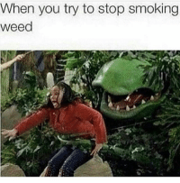 Memes, Smoking, and Weed: When you try to stop smoking  weed Can't stop, won't stop 😀