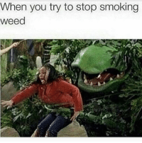 Smoking, Weed, and Marijuana: When you try to stop smoking  weed Can't stop, won't stop 😁 @highaf.tv