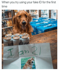 Get the heck in there doggo it's party time!: When you try using your fake ID for the first  time Get the heck in there doggo it's party time!