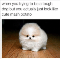 when you trying to be a tough  dog but you actually just look like  cute mash potato