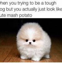 when you trying to be a tough  og but you actually just look like  ute mash potato After a weekend of stuffing your face...