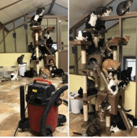 9gag, Memes, and Animal: When you turn on the vacuum cleaner at an animal shelter⠀ @meowed cat vaccum scaredycats 9gag