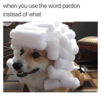 Funny, Word, and Girl Memes: when you use the word pardon  instead of what Exquisite. @theworldpolice