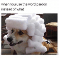 Funny, Lol, and Word: when you use the word pardon  instead of what Tag this friend lol