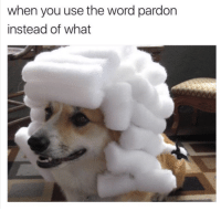 Animals, Funny, and Funny Animals: when you use the word pardon  instead of what This should hold you for 48 seconds so you don't have to interact with anyone. #memes #pics #funny #animals