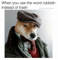 Trash, Word, and You: When you use the word rubbish  instead of trash  @openlygayanimals