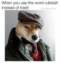 Trash, Good, and Word: When you use the word rubbish  instead of trash  @openlygayanimals Good boy