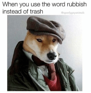 Funny, Trash, and Good: When you use the word rubbish  instead of trash  @openlygayanimals Good boy via /r/funny https://ift.tt/2SkQO9c