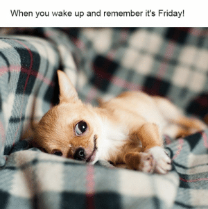 Friday, Internet, and It's Friday: When you wake up and remember it's Friday! 48 Times Internet Has Shared The Best Animal Pictures That Are Absolutely Hilarious - JustViral.Net
