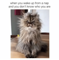 NAPS ARE A FUCKING ADDICTION (@bitc.h is the best): when you wake up from a nap  and you don't know who you are NAPS ARE A FUCKING ADDICTION (@bitc.h is the best)