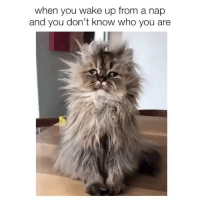 Who am I and what is happening? Tag someone who will feel like this tomorrow 🤘🏼 @teengirlclub @teengirlclub @teengirlclub: when you wake up from a nap  and you don't know who you are Who am I and what is happening? Tag someone who will feel like this tomorrow 🤘🏼 @teengirlclub @teengirlclub @teengirlclub