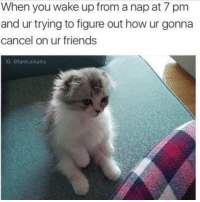 Girl Memes, Tank, and Sinatra: When you wake up from a nap at 7 pm  and ur trying to figure out how ur gonna  cancel on ur friends  IG: @tank sinatra Hm well I've already used the 'not feeling great' line twice this month @tank.sinatra
