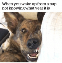 Knowing, Wake, and You: When you wake up from a nap  not knowing what year it is This happens way too often 😳😂