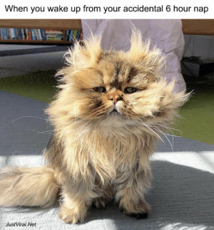 42 Funny Pictures Of Animals Doing Funny Things With Captions - JustViral.Net: When you wake up from your accidental 6 hour nap  JustViral Net 42 Funny Pictures Of Animals Doing Funny Things With Captions - JustViral.Net