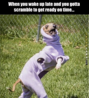 Animal Memes Of The Day 30 Pics – Ep56 #animalmemes #funnymemes - Lovely Animals World: When you wake up late and you gotta  scramble to get ready on time..  GHTARDCO Animal Memes Of The Day 30 Pics – Ep56 #animalmemes #funnymemes - Lovely Animals World