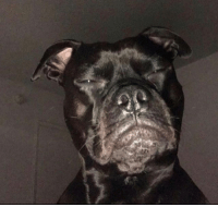 When you wake up out of your sleep realizing the shit that bae said a week ago doesnt add up so you stare at them while they sleep https://t.co/CHyp1u9hyU: When you wake up out of your sleep realizing the shit that bae said a week ago doesnt add up so you stare at them while they sleep https://t.co/CHyp1u9hyU