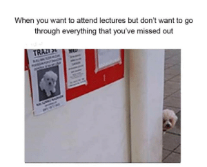 Tumblr, Http, and Com: When you want to attend lectures but don't want to go  through everything that you've missed out Follow us @studentlifeproblems​