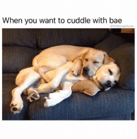 """Af, Ass, and Bae: When you want to cuddle with bae  @Dr Smashlove Shout to u narcoleptic lookin ass ladies y'all know who the fuck y'all are I love y'all. I road trip witchoe ass: snoring. Netflix and chill: snoring. U put your head in my lap for 70 seconds: snoring. Movies: snoring. I like a narcoleptic ass lady because I could look over atchoe peaceful teddy bear lookin ass it will calm me down. Shout to u constant nappers Bruh I fuck with y'all. Benadryl in the middle of the day lookin asses. Aschleep before the plane fully take off of the runway lookin asses. Aschleep by the pool, wake up with a sunburn lookin asses (achleep in the sun -> sunburn -> tan lines -> me likey 🤗). Because I'm an angsty mess of a human being, full of work stress, anxiety, sadness, and alarm over bees dying at an unprecedented rate, and I therefore don't schleep, u could schleep enuf for the two of us 😍. Brang yo ass, schleepyhead. Pajamas still on at 4 pm lookin ass, talmbout """"what's for breakfast"""" when I'm focused on dinner, lookin ass. Let's start a future together. One thing you'll never do is fall aschleep while I'm laying this Grade A pipe ... U gon be awake AF for that ... but u could schleep blissfully for 12 hours after that, BLESS UP 😴🤤😍😂"""