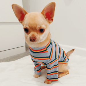 When you want to show off your new threads but all the hoomans be self isolating: When you want to show off your new threads but all the hoomans be self isolating