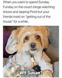 "Friends, Fucking, and Funny: When you want to spend Sunday  Funday on the couch binge watching  shows and sipping Pinot but your  friends insist on ""getting out of the  house"" for a while  Wif Susan? Could you fucking not Susan🙄 PupPic via @rambothepuppy girlsthinkimfunnytwitter sundayfunday stayingin nahsusan"
