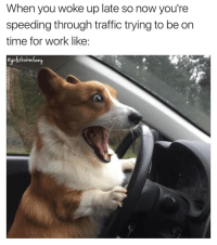 Fast and furryous 😲🚗💨 girlsthinkimfunnytwitter mondayvibes imlate ahhhhh fml fastandfurry: When you woke up late so now you're  speeding through traffic trying to be on  time for work like: Fast and furryous 😲🚗💨 girlsthinkimfunnytwitter mondayvibes imlate ahhhhh fml fastandfurry