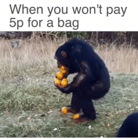 When you won't pay  5p for a bag