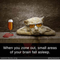 Brains, Facts, and Fall: When you zone out, small areas  of your brain fall asleep.  weird-facts.org  @factsweird