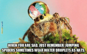 Cure for arachnophobia: WHEN YOUARE SAD JUST REMEMBER JUMPING  SPIDERS SOMETIMES WEAR WATER DROPLETS AS HATS  Animalmemes Cure for arachnophobia