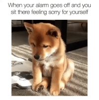 Memes, Sorry, and Alarm: When your alarm goes off and you  sit there feeling sorry for yourself Sleeping is like death without the commitment
