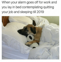 Memes, Work, and Alarm: When your alarm goes off for work and  you lay in bed contemplating quitting  your job and sleeping till 2019 Current situation 😂
